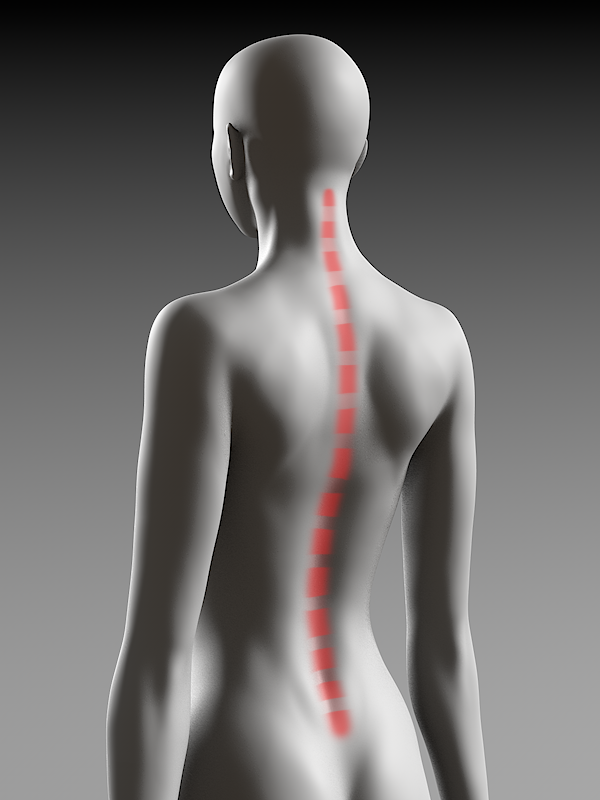 通常の背骨のカーブ